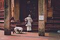 Vrindavan - India (12955794664).jpg