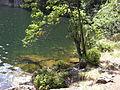 Vylet k Cernemu jezeru Sumava - 9.srpna 2010 202.JPG