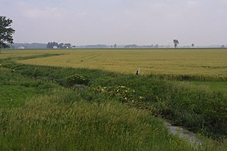 Great Black Swamp Wetland in Ohio and Indiana, United States