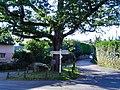Waddeton oaktree - geograph.org.uk - 37899.jpg