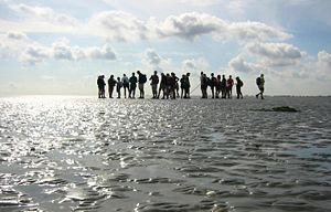 Mudflat hiking - Group of mudflat hikers near Pieterburen, Netherlands