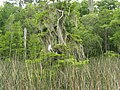 Wakulla-springs 2009-05-04T19 20 44.jpg