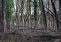 Wandern in Märkisch Oderland - panoramio (3).jpg