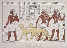 Um hieróglifo representando duas chitas com coleira