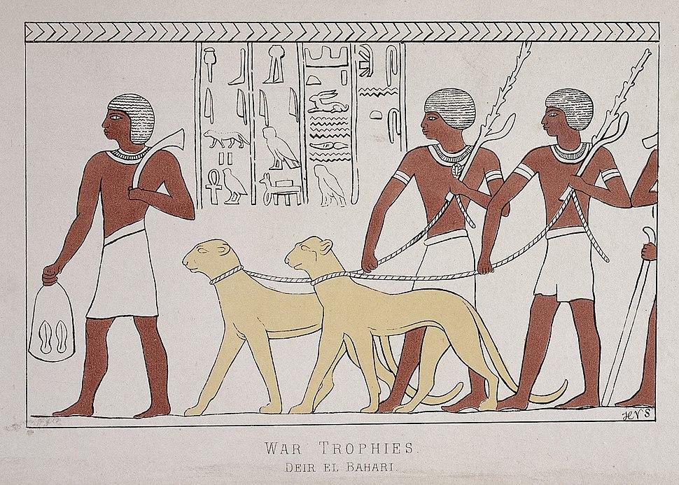 War trophies Deir el Bahari Wellcome L0027402