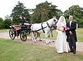 Wedding carriage.jpg