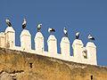 Weißstorch in Marokko.jpg