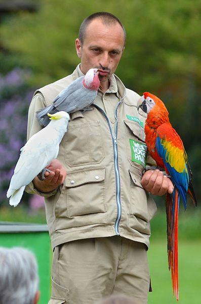 File:Weltvogelpark Walsrode (Flugshow) - panoramio (3).jpg