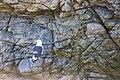 Western Gull (23477303035).jpg