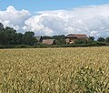Wheat field and Grange Farm outbuildings - geograph.org.uk - 889003.jpg