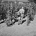 Wijnkoningin Mosella poseert met een emmer druiven in de wijngaard, Bestanddeelnr 254-4184.jpg