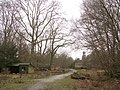 Winter in the Park Ground Inclosure, Clay Hill, New Forest - geograph.org.uk - 122664.jpg