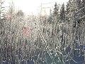 Winter morning in Lēdmane - panoramio - Paul Berzinn (2).jpg