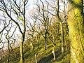 Woodland above Barics Gwyr Mon - geograph.org.uk - 296870.jpg