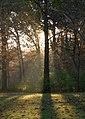 Woods110215D.jpg