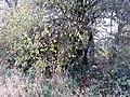 World War II pillbox between the Thames and Culham Cut, Oxfordshire 05.jpg