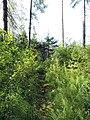 Yaroslavsky District, Yaroslavl Oblast, Russia - panoramio (108).jpg