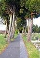 Yew Tree Avenue - geograph.org.uk - 1181369.jpg