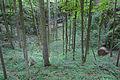 Závrt poblíž jeskyně Spirálka, Holštejn, okres Blansko.jpg