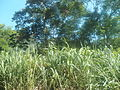 Zona rural de Mangaratiba.jpg