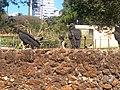 Zoológico de Goiânia 1.jpg