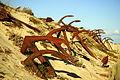 Âncoras na Ría Formosa.jpg