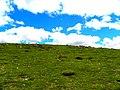 Çukuryurt civarı - panoramio (2).jpg