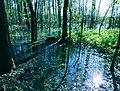 Ługi helenowskie wielki ług las 3.jpg