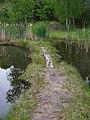Řepora, lávka mezi rybníčky.jpg