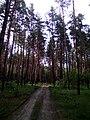 Апостоловский лес дорога 3.jpg