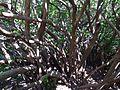 Ботанічний сад ім. М.Гришка IMG 9116.jpg