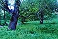 Вечірні сутінки в парку «Мала Софіївка» (Лука-Мелешківська) P1220196.jpg
