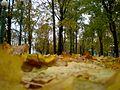 Восень... - panoramio.jpg
