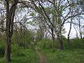 Дендрологічний парк 230.jpg