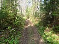 Дорога в лесу, середина сентября 2012 - panoramio.jpg