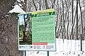 Дуб Шевченка в парку Березовий гай 02.jpg