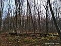 Еталонна діброва Вінницьке лісництво 10.jpg