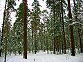 Зима - panoramio - alinco fan.jpg