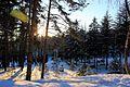 Зимний парк. Кисловодск.jpg