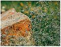 Кам'яна Могила, степ.jpg
