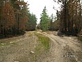 Канельярви- Заходское , низовой пожар 2006 - panoramio - Dmitriy Alekseenkoff (3).jpg