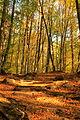 Лесные тропы гор.JPG