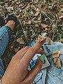 Луговой мотылек на пальце.jpg