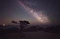 Млечный Путь над можжевеловой рощей в Новом Свете.jpg