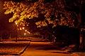 Ніч в парку. осінь.jpg