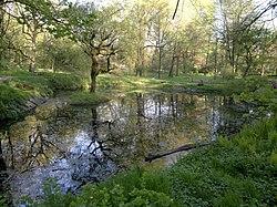 Озеро в Калининградском ландшафтном парке.jpg