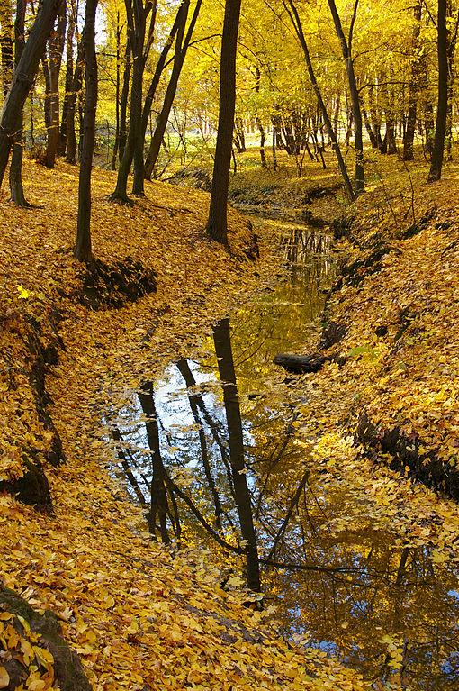 Осінь в Голосіївському парку.JPG