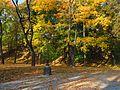 Осінь IMG 1249.jpg