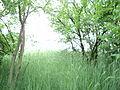 Парк шума Гази Баба во мај (178).JPG