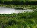 Пересыхающее озеро - panoramio (1).jpg